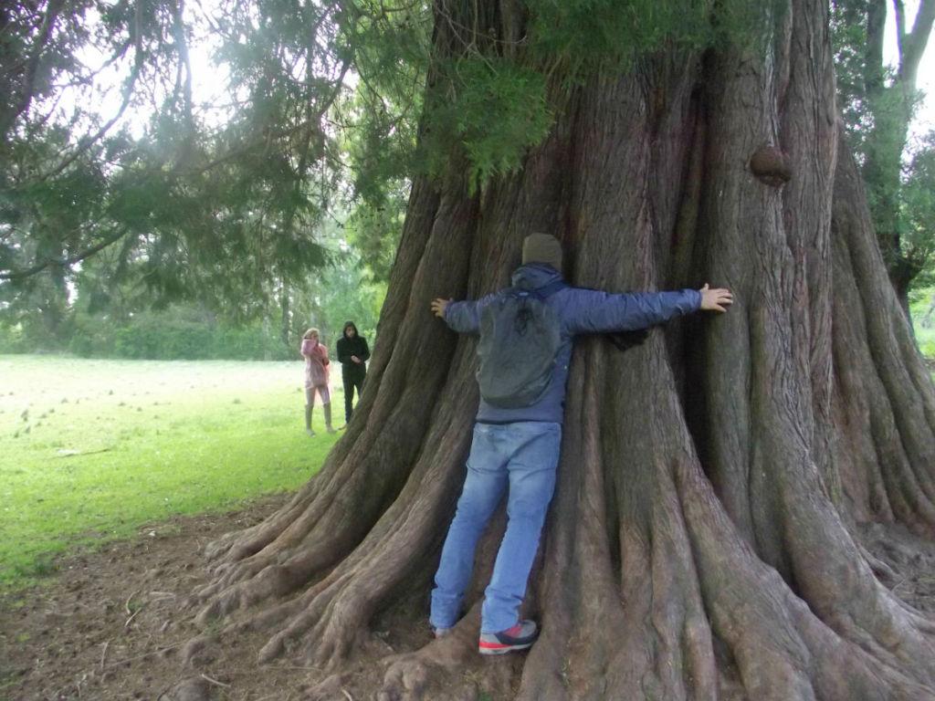 Árvore centenária em Valdívia