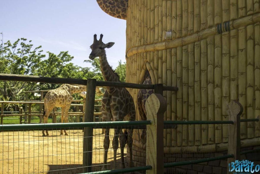 Zoo Beto Carrero