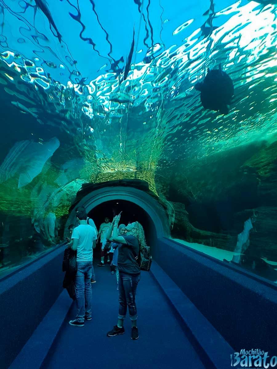 Two Oceans Aquarium, Cidade do Cabo