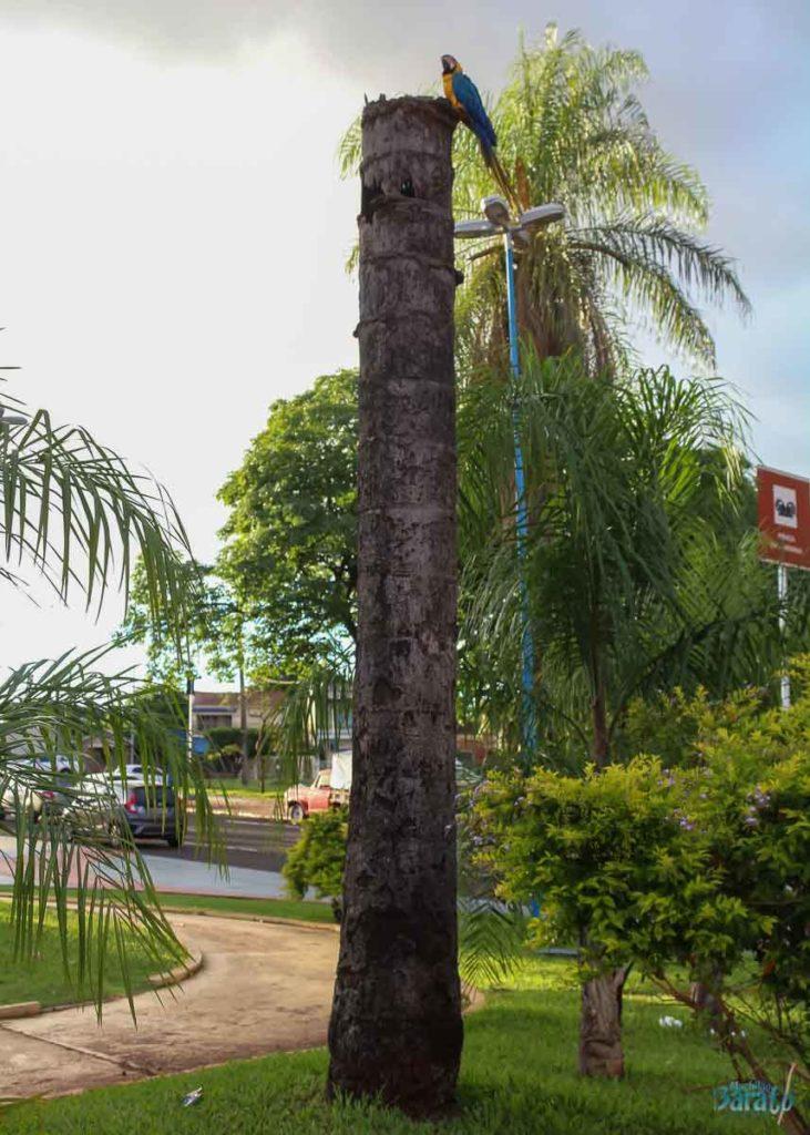 Arara em Campo Grande
