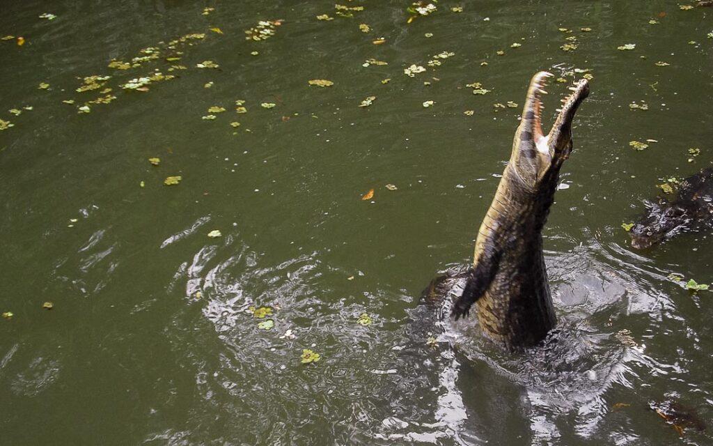 Passeio de chalana no Pantanal